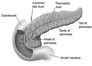 pancreas_duodenum_and_small_intestine