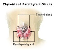 Thyroid and Parathyroid