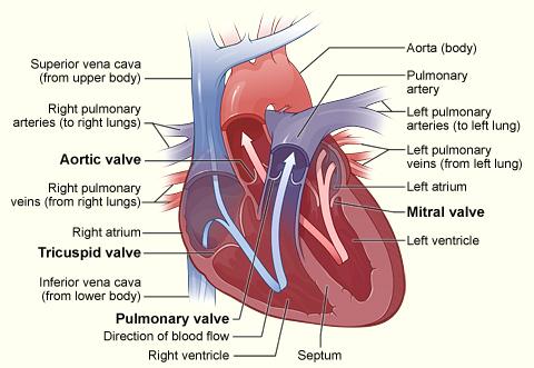 vein ligation