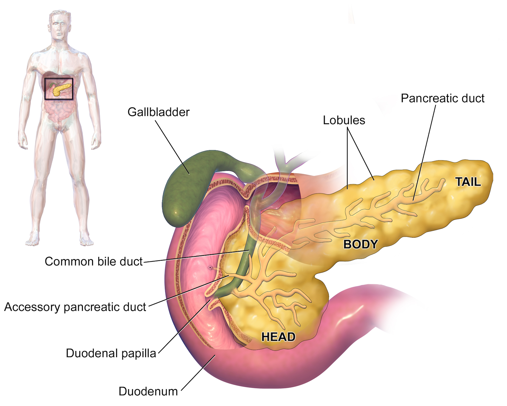 Department Of Surgery Cholecystectomy Gallbladder Removal