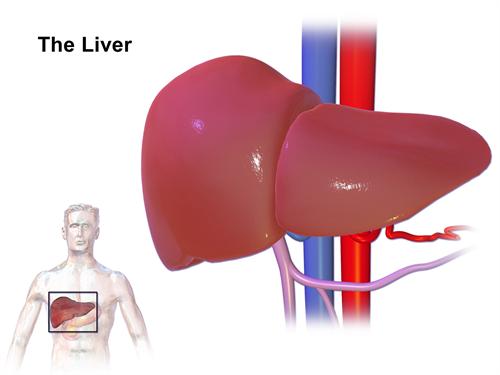 Department of Surgery - Benign Liver Tumors