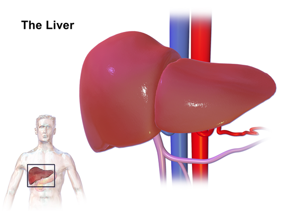 Department Of Surgery Alcoholic Liver Disease